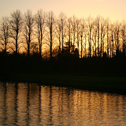 Reflection of trees at sunset