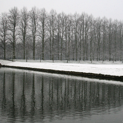 Snow-covered trees reflected in the River Cam
