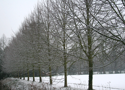 Avenue of snow-covered trees