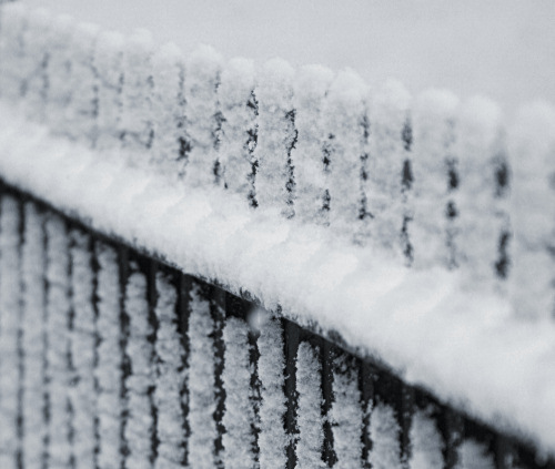 Snow-covered railings