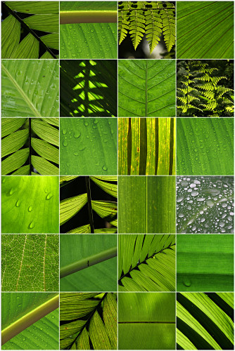 The first shows a variety of foliage within the rainforest. Colour & Form -