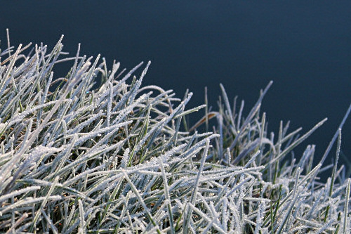 Frosty grass on the banks of the River Cam
