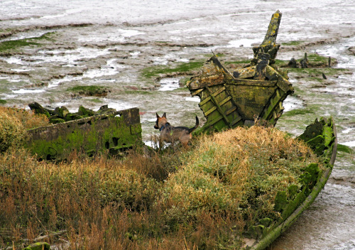Grasses growing on wrecked boats