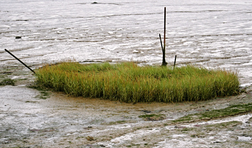 Grass-boat
