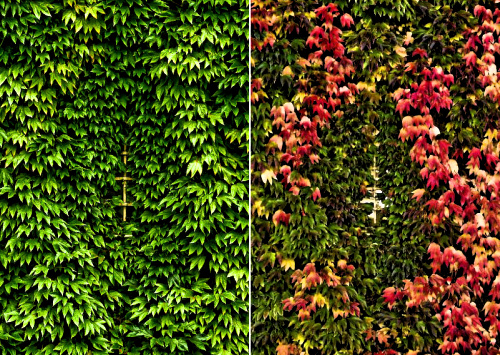 Red v Green 1