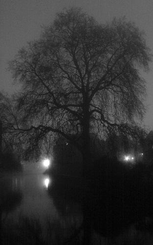 The Master's Lodge Tree