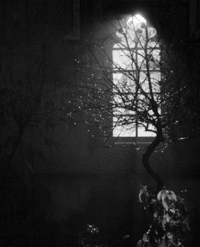 Tree in Night Mist