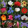 Costa Rica – Flowers