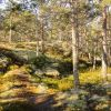 Sweden – Forests & Lakes