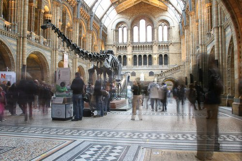 Natural History Museum Lobby