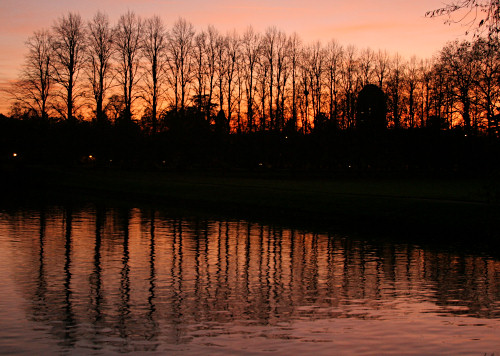 Tree reflections at sunset
