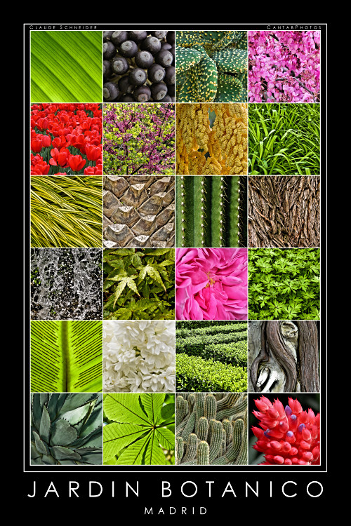 Colour & Form - Royal Botanic Gardens, Madrid