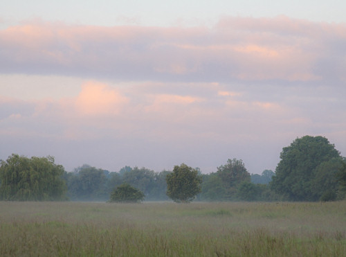 Mist rising at dawn in the meadows