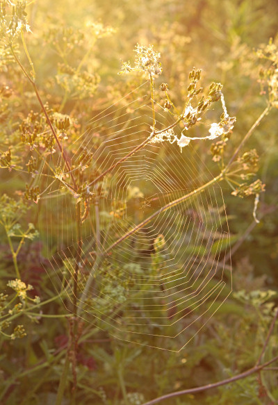 Spirder's Web at sunrise