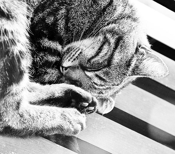 Cat sleeping on balcony