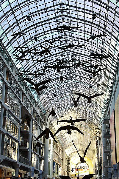 Flock of geese in Eaton Centre shopping mall